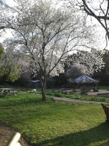 My beautiful backyard